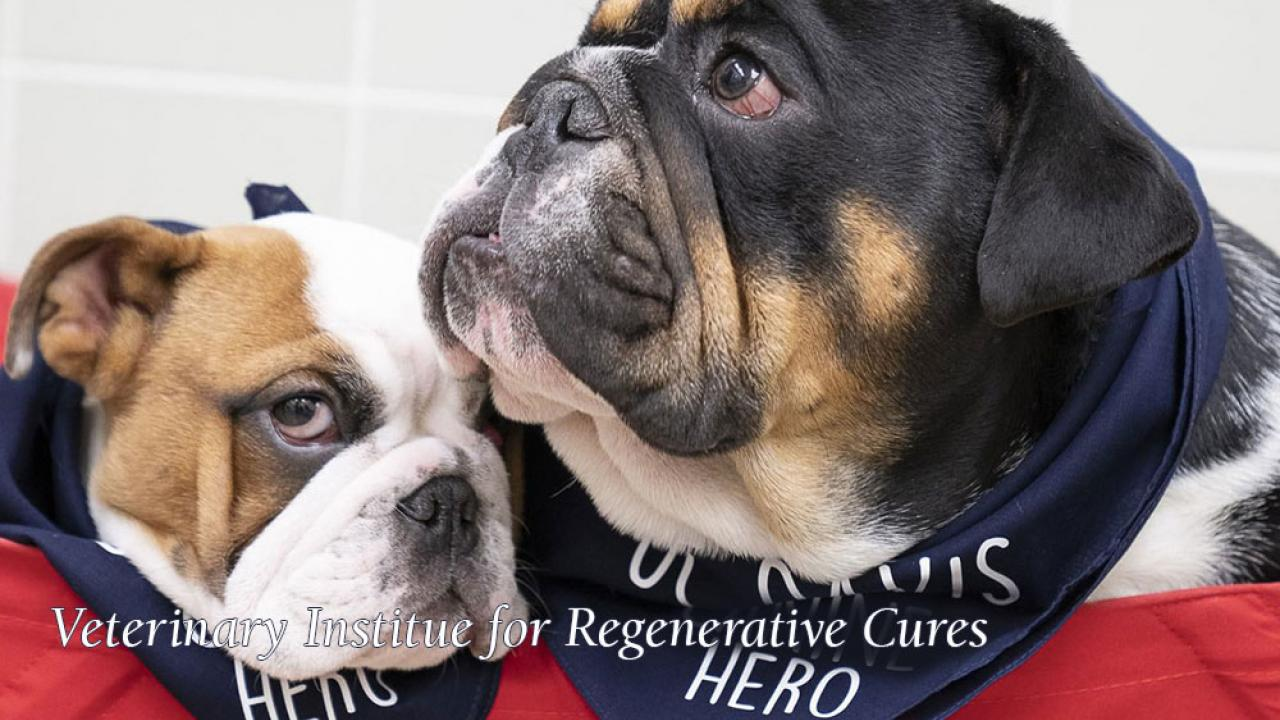 Arthur & Slughorn, two of our Spina Bifida canine heroes